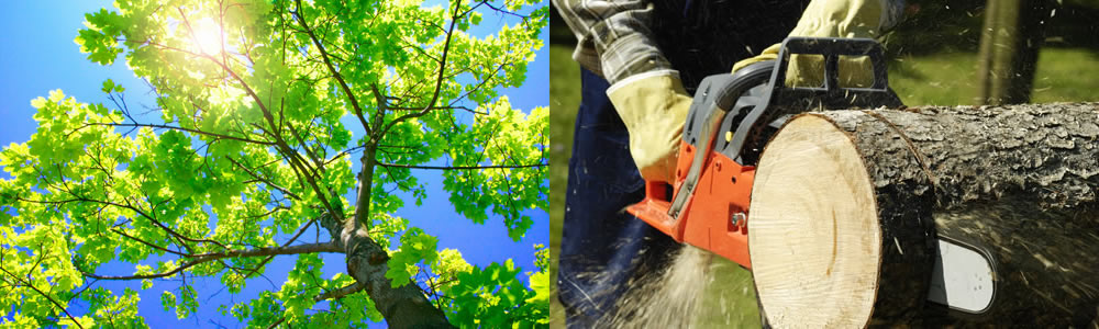 Tree Services Sullivans Island